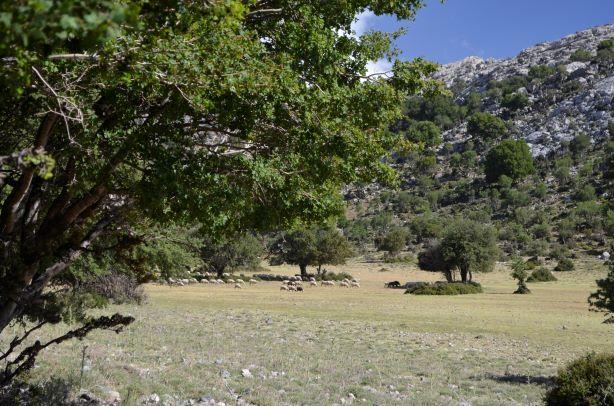 25 mai omalos plateau small (17)