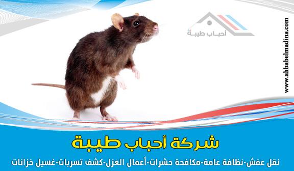 صورة شركة مكافحة فئران بالمدينة المنورة للايجار 00201025046417