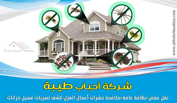 صورة أرخص شركة مكافحة حشرات بينبع 0509312584 وأفضل رش مبيدات