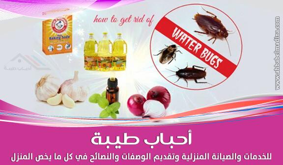 التخلص من الحشرات المنزلية بطريقة آمنة على صحتك وصحة أسرتك