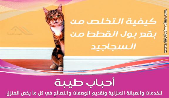 Photo of التخلص من بقع بول القطط من السجاجيد