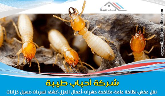 Photo of شركة مكافحة النمل الابيض بالدمام بضمان وخصم 20%