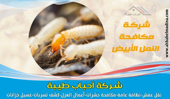 Photo of شركة مكافحة النمل الابيض بجدة 0500589444 ومكافحة النمل قبل البناء