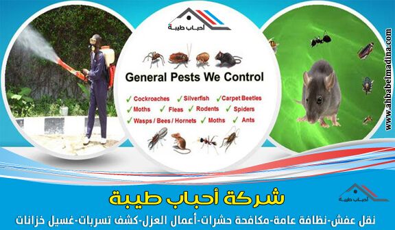 أفضل شركة مكافحة حشرات بنجران | وأرخص رش مبيدات ببيشه & مع خصم 20%