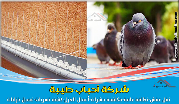 صورة شركة مكافحة الحمام بالخبر وتركيب طارد الحمام والطيور على الشبابيك والأسطح