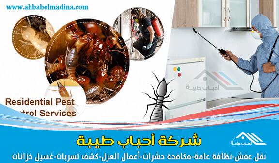 شركة مكافحة حشرات بالقنفذة & وأفضل شركة رش مبيدات بالليث