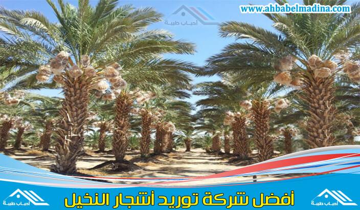 توريد اشجار النخيل بالرياض & أفضل مقاول توريد نخيل في الرياض وتلقيح وزراعة النخيل