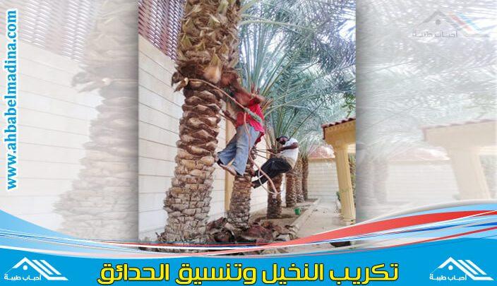 شركة تكريب النخيل بالدمام & أفضل عمال زراعة وغرس وتلقيح النخيل بالمنطقه الشرقيه