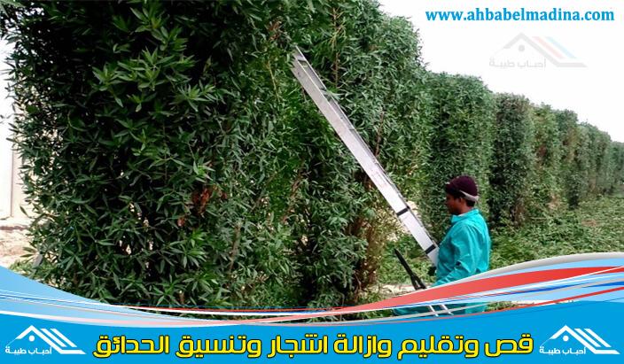 عامل قص الاشجار بالقطيف خبير محترف في قص وتقليم الاشجار بالقطيف في أقل وقت وبأفضل سعر