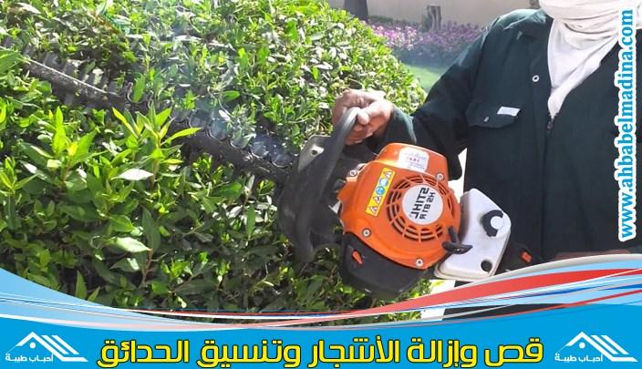 Photo of عامل قص الاشجار بالخبر & أفضل عمال قطع الاشجار