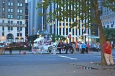15. carruagem central park - new york - abahnao.com - Barbara Poplade Schmalz©