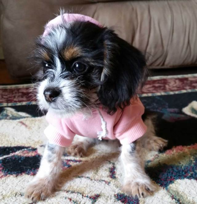 "Bijou with her ""Princess"" hoodie."