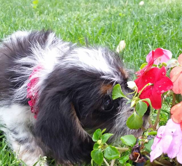 Bijou always makes time to stop and smell the flowers.