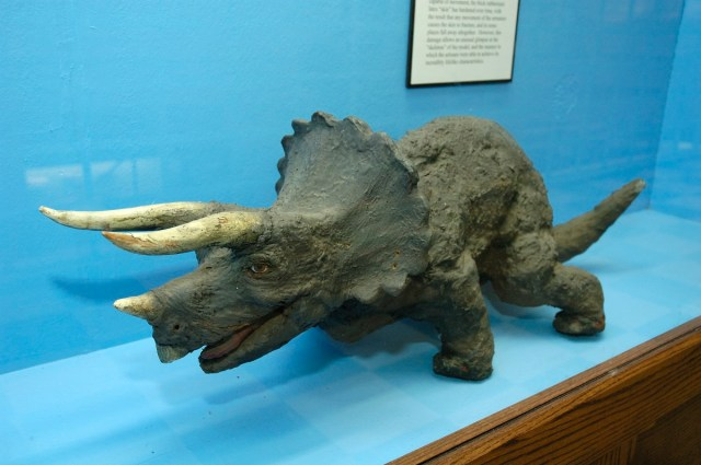 Triceratops model on display at the UW American Heritage Center.