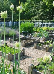 Vegetable Garden | ahealthylifeforme.com