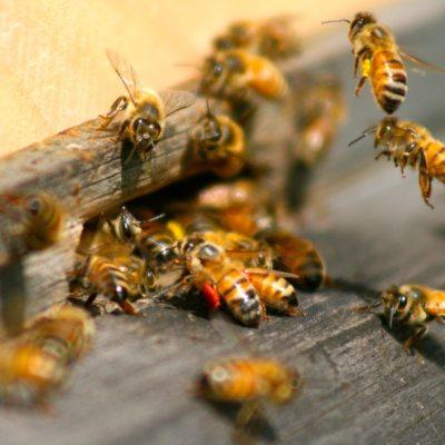 Why I Keep Bees