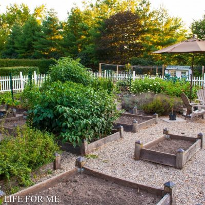 Fall Garden Planting To Do List