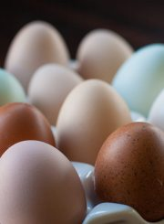 Which Eggs should you be eating? There are more and more choices of egg varieties when you are at your grocery store. Regular, Cage Free, Free Range, and Organic. Which ones are the best choice for you? Read on and find out.