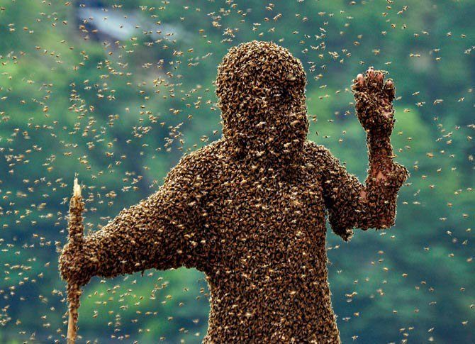 China—On his way to second place in a bee-wearing contest in Hunan Province, a contestant disappears beneath a carpet of insects lured by a queen bee in a cage. A scale he was standing upon tallied his total take: about 50 pounds of bees.