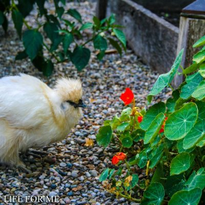 Companion Planting in the Vegetable Garden