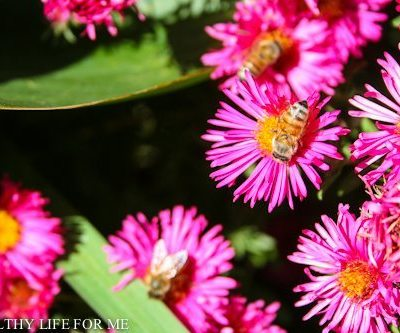 How To Attract Honey Bees To Your Vegetable Garden