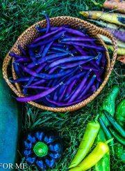 Understanding labels on Vegetable Seeds