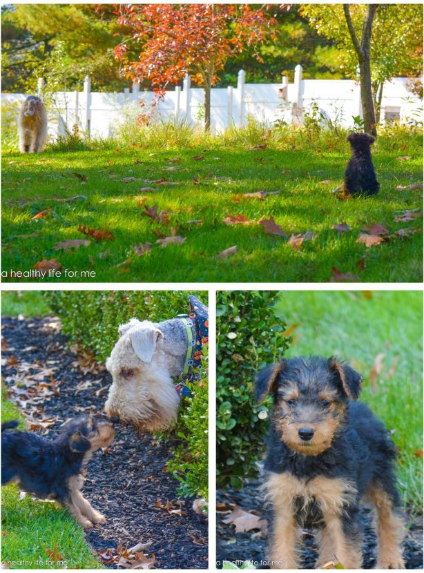 Xena and Roman in the Yard