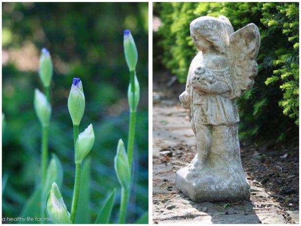Unopened Iris in May