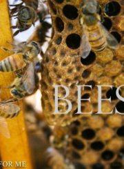 Honey Bee Hive Set Up | ahealthylifeforme.com