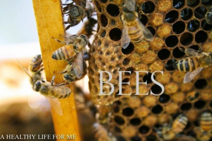 Honey Bee Hive Set Up | ahealthylifeforme.com