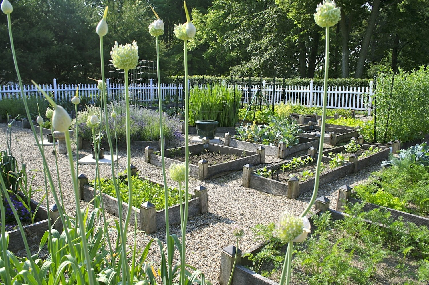 Vegetable garden with covered walkways - Planning Ideas For Your Vegetable Garden