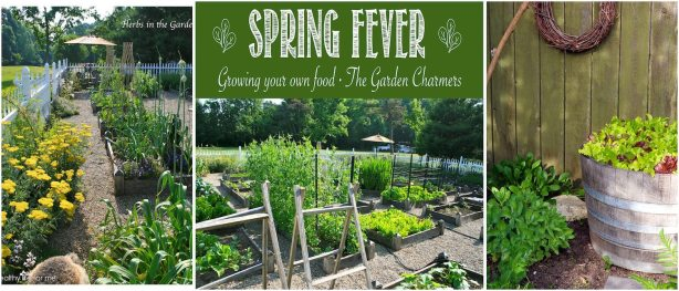 The Garden Charmers Spring Fever Growing Your own Food | Planning Ideas for your Vegetable Garden