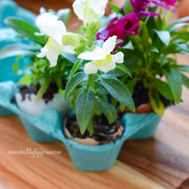 Annuals used in DIY Eggshell Planters #EarthDayProjects