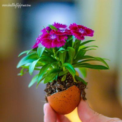 DIY Eggshell Planters