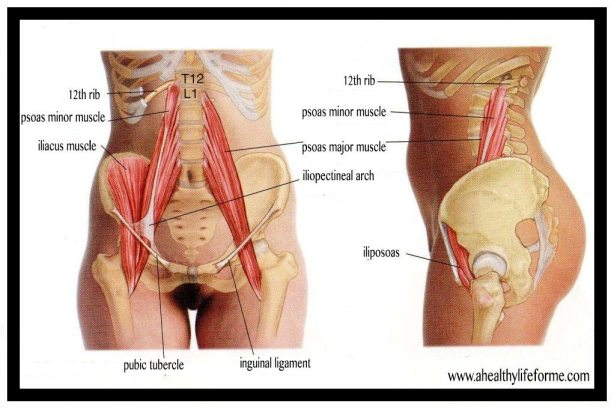 Psoas Muscle Diagram | 52 Tips for Health and Fitness Success Tip #10