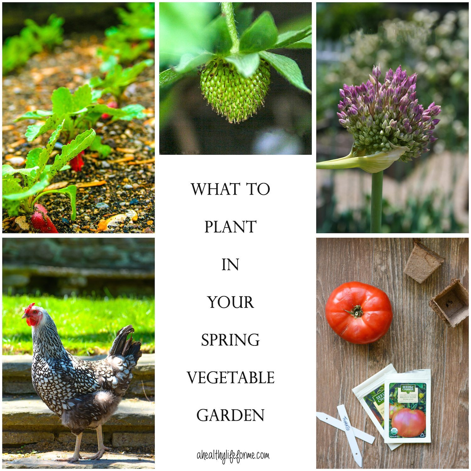 Planting Your Spring Vegetable Garden A Healthy Life For Me – What to Plant in Your Vegetable Garden