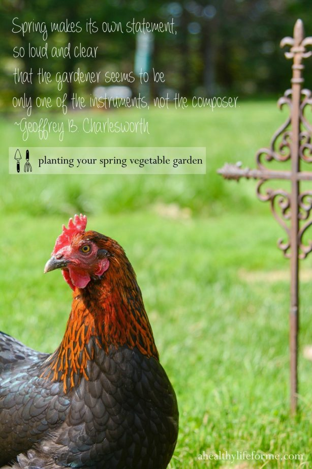 Chickens in the Spring Garden Planting Your Spring Vegetable Garden