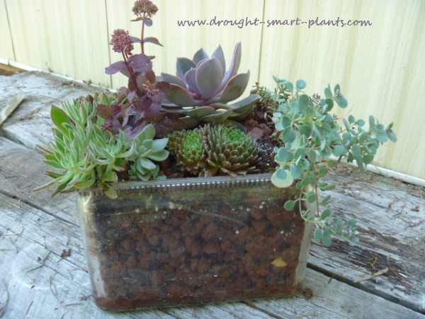 Glass Terrarium Project 5 Easy Earth Day Craft Ideas