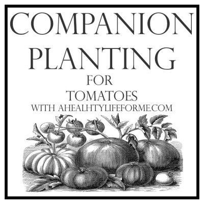Companion Planting Tips for Tomatoes