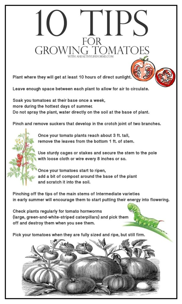 10 Tips for growing tomatoes   ahealthylifeforme.com