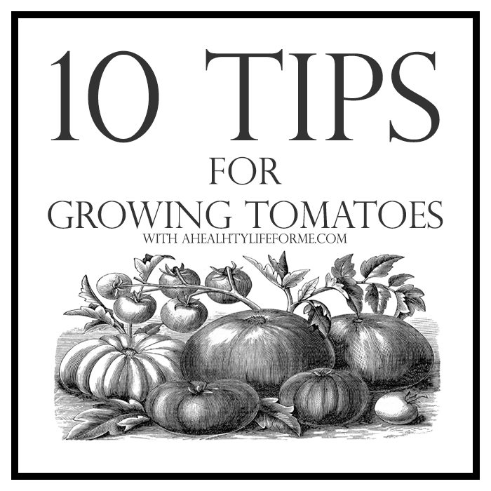 10 Tips for Growing Tomatoes | ahealthylifeforme.com
