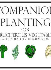 Companion Planting for Cruciferous Vegetables | ahealthylifeforme.com