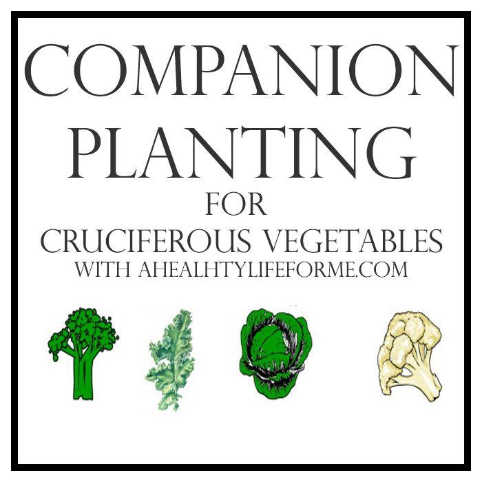Companion Planting for Cruciferous Vegetables   ahealthylifeforme.com