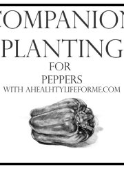 Companion Planting for Peppers | ahealthylifeforme.com