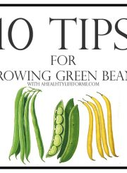 10 Tips for Growing Green Beans | ahelthylifeforme.com
