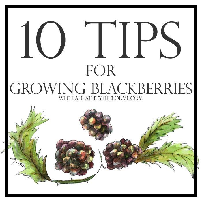 10 Tips for Growing Blackberries | ahealthylifeforme.com