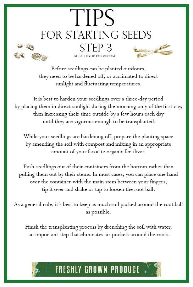 Tips for Starting Seeds Step 3 Transplanting | ahealthylifeforme.com