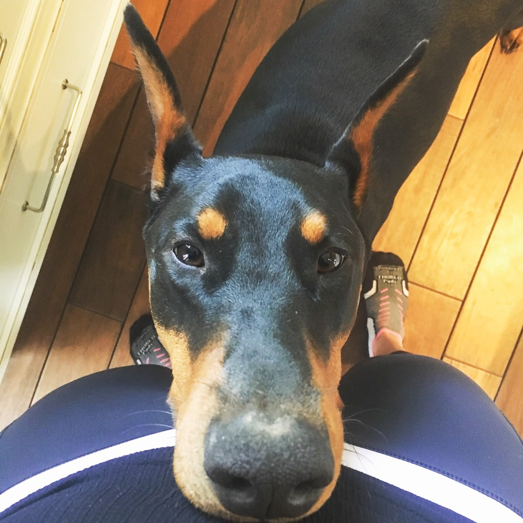 My Doberman Brutus 1 year old