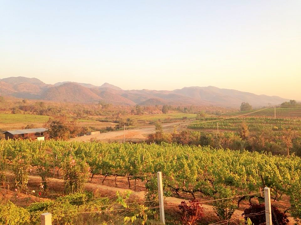 Worldwide bucketlist planner. Red Mountain Estate. Drinking wine in Myanmar. | ahedgehoginthekitchen.com