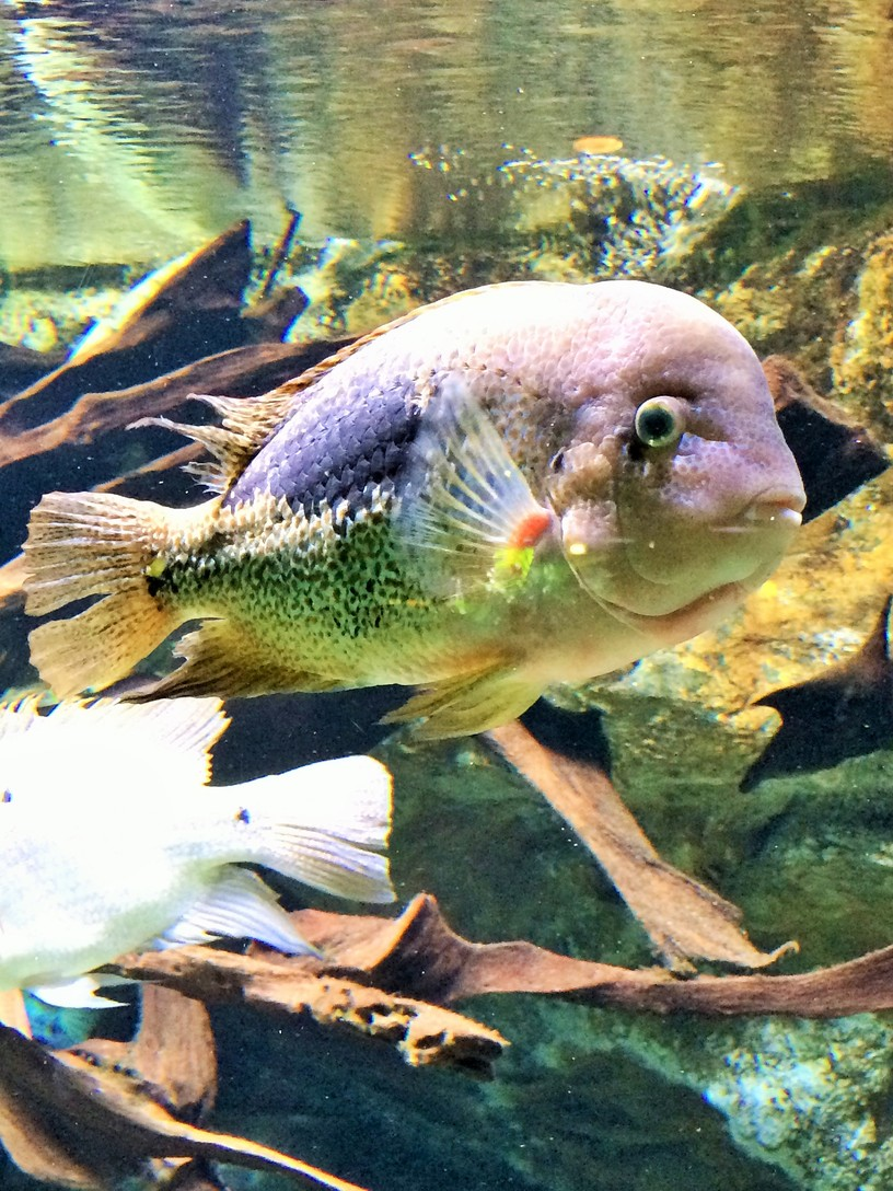 Porte Dorée Aquarium, 12th arrondissement, Paris. | ahedgehoginthekitchen.com